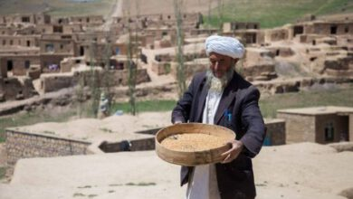 Photo of A THIRD OF AFGHANISTAN'S POPULATION LACKS FOOD AS DROUGHT BITES