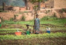Photo of ONE IN THREE PEOPLE NOW CRITICALLY HUNGRY IN DR CONGO