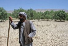 Photo of APPROXIMATELY 250 THOUSAND AFGHANS FACE HUNGER DUE TO DROUGHT