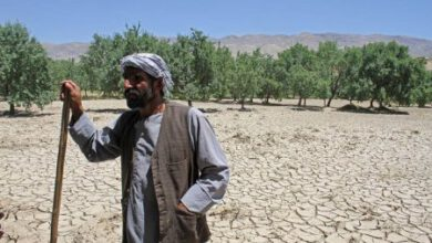Photo of The drought in Afghanistan left millions of farmers starving.