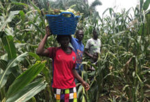 Photo of Support from TIKA to Guinean farmers