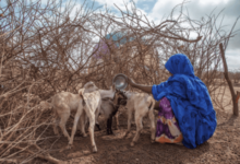 Photo of Urgent action plan needed in Africa due to drought